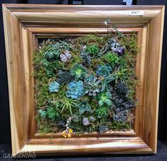 Succulent frame by Floral Dimensions