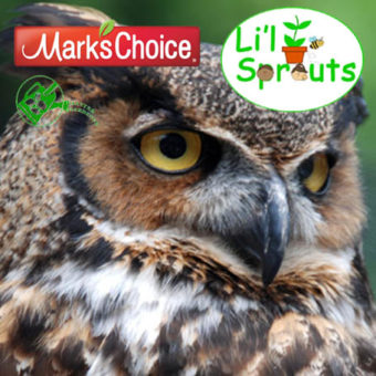 Li'l Sprouts Workshop - Owls