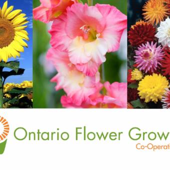 Ontario Flower Growers