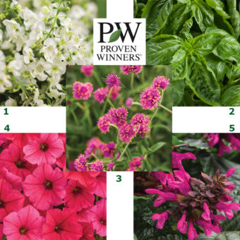 Proven Winners 2019 Must See Plants