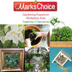 Mark's Choice Workshops