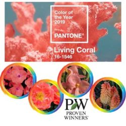 Pantone Colour of the Year: Coral