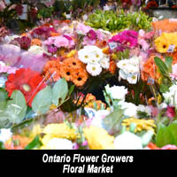 Ontario Flower Growers