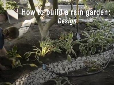 Rain Garden Video 3