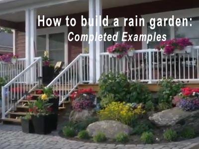 Rain Garden Video 7